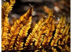 植物,蕨类植物,阳光464998