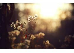 秋季,花卉,壁纸,背景虚化,景深,植物153633