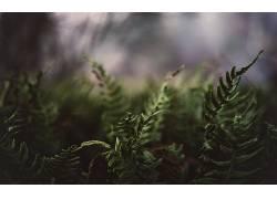 植物,蕨类植物366162