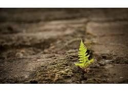 植物,蕨类植物396454