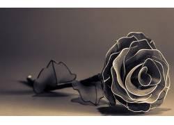 摄影,花卉,玫瑰,简单的背景,艺术品,景深,单色,乌贼663679