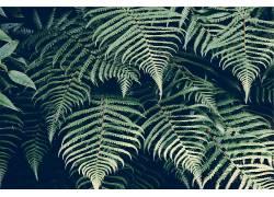 植物,蕨类植物439664
