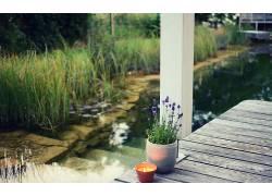 植物,薰衣草,池塘,花卉436901