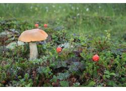 植物,蘑菇,宏284710