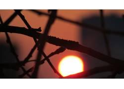 科,植物,太阳,宏285185