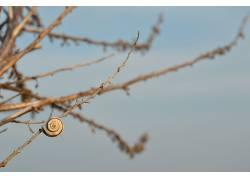植物,蜗牛,树枝150232