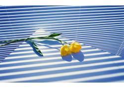 摄影,花卉154665