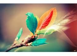 树叶,动漫,华美,壁纸,植物,照片处理,宏,数字艺术3086图片