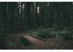 在户外,森林,桥,自然光,壁纸,蕨类植物,植物480654