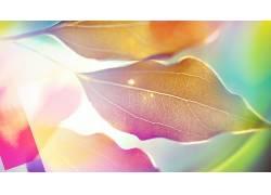 树叶,壁纸,华美,景深,植物,阳光116023图片
