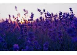 摄影,壁纸,植物,日落,景深,领域317474