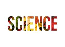 科学,壁纸,树叶,植物,活版印刷148899图片