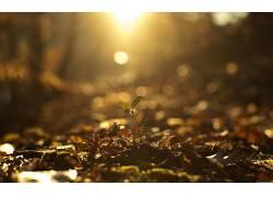 摄影,阳光,秋季,植物,壁纸,景深332737