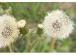 夏季,壁纸,花卉,植物383575