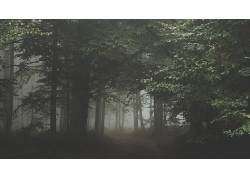 摄影,黑暗,森林,树木,树叶,薄雾,路径,植物,雨,壁纸405481