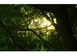 摄影,黑暗,阳光,苔藓,树木,植物,壁纸,科405483