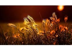 植物,阳光,领域,文本234363