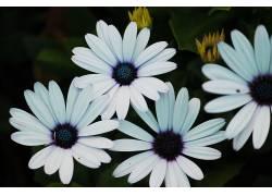 摄影师,花的,紫色,白色,植物学656492