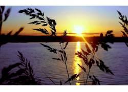 夏季,日落,太阳,水,植物,黄色,橙子,蓝色,黑色,壁纸,六月,云,轮廓