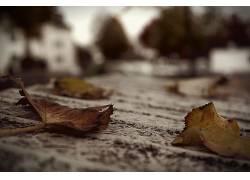 树叶,壁纸,秋季,植物,模糊34919