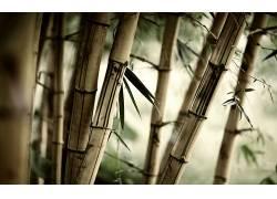 竹,树叶,壁纸,植物16730
