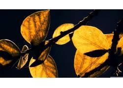 树叶,壁纸,阳光,植物103976图片
