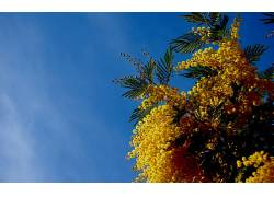 天空,花卉,黄色的花朵49097