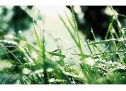 摄影,壁纸,植物,树叶,宏,绿色,草322056