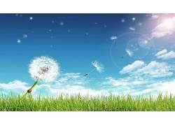 天空,草,植物,数字艺术,花卉,窃听器,昆虫70341