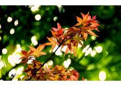 摄影,壁纸,植物,树叶,景深316310