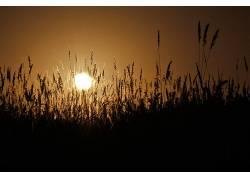 太阳,植物121867