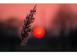 太阳,背景虚化,植物,景深,轮廓,壁纸337962