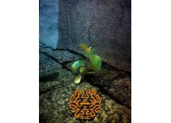 数字艺术,植物457656图片