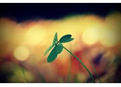树叶,植物,宏7647图片