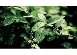 树叶,植物,景深,科,水滴,壁纸462704图片