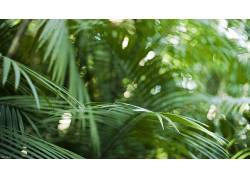 摄影,壁纸,植物,热带,景深,蕨类植物,背景虚化334309