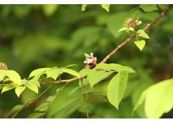 树叶,植物,树木,壁纸,模糊,摄影244772