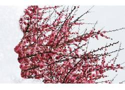 树叶,植物,树木,轮廓,面对,双重曝光,科,简单的背景,轮廓,樱桃树,图片