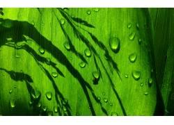 树叶,植物,水滴,绿色,壁纸,宏3212图片
