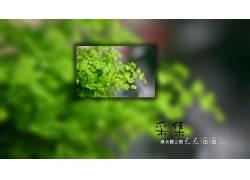 植物,数字艺术,大学25200