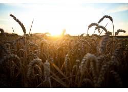 植物,日落,壁纸,太阳,天空,太阳光线449982