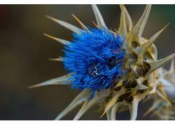 植物,昆虫,蓝色,黄色667384