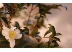 摄影,壁纸,植物,花卉,景深330479