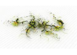 数字艺术,艺术品,植物123238