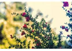 植物,景深,花卉,粉色的花朵227979