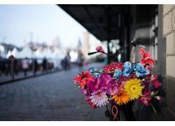 市,花卉,植物,华美549623