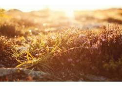 摄影,壁纸,植物,草,景深326017图片