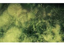 摄影,壁纸,植物,草,景深327322图片