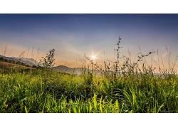 绿色,壁纸,森林,草,植物259948图片