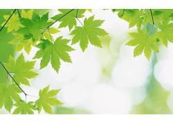 绿色,壁纸,植物,树叶325972